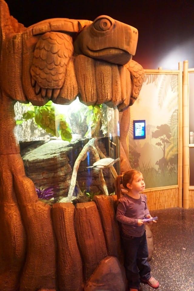 turtle-exhibit