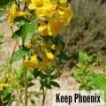 keep-phoenix-beautiful