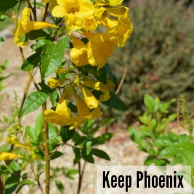 Keep Phoenix Beautiful